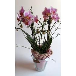 Orchid Filigree in Glas...
