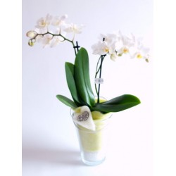 Orchid White Small Blossoms