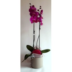 Orchid with Pot and Deco