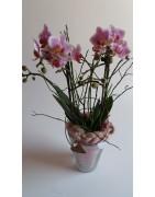 Blumenladen, Schnittblumen, Sträuße